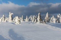 美好的冬天风景Krkonos在一个晴天 Krkonose山的冬天土坎 用霜盖的树 库存图片