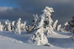 美好的冬天风景Krkonos在一个晴天 Krkonose山的冬天土坎 用霜盖的树 免版税库存图片