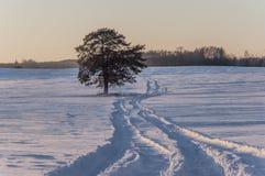 美好的冬天landscape.3d图象 在铁路路附近的城市发光雪星期日对冬天木头 免版税库存图片