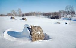 美好的冬天landscape.3d图象 干草劳斯在领域的 免版税图库摄影