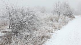 美好的冬天landscape.3d图象 横向风景冬天 影视素材