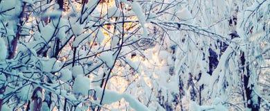 美好的冬天landscape.3d图象 灌木积雪的分支根据日落的,可以使用作为背景或纹理 图库摄影