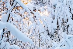 美好的冬天landscape.3d图象 灌木积雪的分支根据日落的,可以使用作为背景或纹理 免版税库存照片