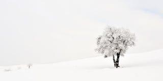 美好的冬天landscape.3d图象 库存图片