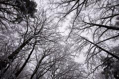 美好的冬天landscape.3d图象 免版税库存照片