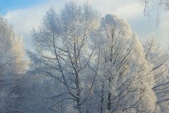 美好的冬天landscape.3d图象 图库摄影