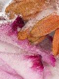 美好的冰冷的同色而浓淡不同的花卉抽象 免版税图库摄影