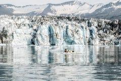 美好的冰川盐水湖背景和逗人喜爱的封印在冰岛 库存照片