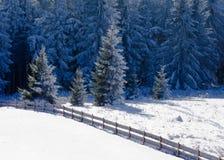 美好的冻结的冷杉森林多雪的冬天横向 免版税库存照片