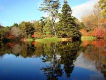 美好的反射在Asticou杜娟花庭院,缅因里 免版税库存照片