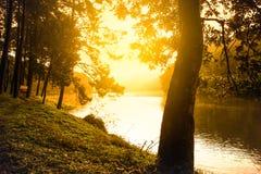 美好的发球区域和河杉木森林场面 免版税库存图片