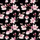美好的可爱的一株桃红色日本木兰的招标草本美妙的花卉夏天样式 皇族释放例证