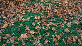 美好的叶子背景在秋天,在树绿草下落的棕色叶子,在11月城市在公园 库存图片