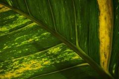 美好的叶子颜色和纹理特写镜头图片 库存图片