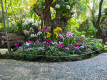 美好的后院庭院公园场面 库存图片