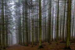 美好的图象高松树和一条道路在森林中间 免版税库存图片
