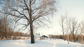 美好的土气冬天风景 股票视频