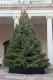 美好的圣诞节例证结构树向量 图库摄影