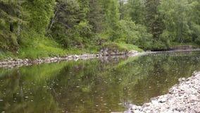 美好的在绿色森林股票英尺长度中的风景流动的镇静河 开花的河慢慢地流经森林 股票视频