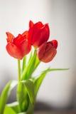 美好的在花瓶的春天红色郁金香 免版税库存图片