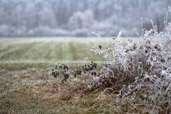 美好的在霜和植物盖的领域和干草 库存图片