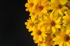 美好的在黑背景的黄色开花的花 库存照片