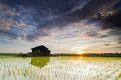 美好的在稻田中间的风景偏僻的摒弃房子与不可思议的颜色日出和剧烈的云彩 免版税库存照片
