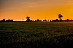 美好的在puddy米领域自然背景的日落橙色天空在亚洲 图库摄影