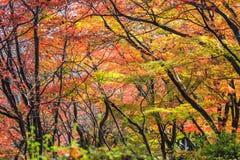 美好的场面在一个森林里在日本 免版税图库摄影