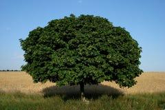 美好的域横向天空结构树植被 库存照片