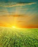 美好的域绿色日落 库存图片