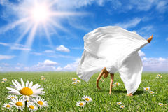 美好的域草甸春天 库存图片