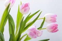 美好的复活节彩蛋装饰colorfull怂恿季节性柔和的淡色彩 免版税库存照片