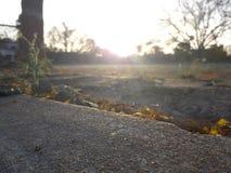 美好的夏天早晨 图库摄影