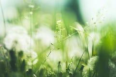 美好的夏天背景用狂放的草本 免版税库存图片