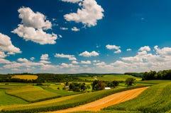 美好的夏天覆盖在ru的绵延山和农田 免版税库存图片
