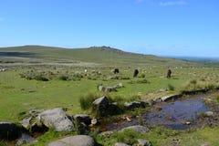 美好的夏天风景在达特穆尔国立公园,英国 图库摄影
