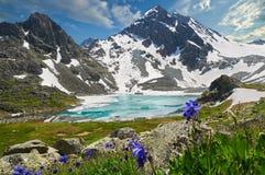 美好的夏天风景,阿尔泰山俄罗斯 免版税库存图片