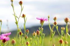 美好的夏天,草甸环境美化在天的日落 库存照片