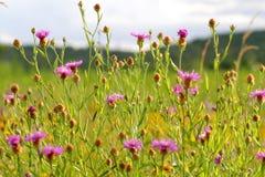 美好的夏天,草甸环境美化在天的日落 免版税库存图片