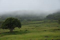 美好的多雨晚上有提供好盖子的一棵偏僻的树的一个森林 库存图片