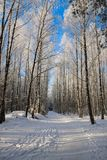 美好的多雪的冬天风景 免版税库存图片
