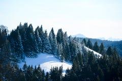 美好的多雪的山法国阿尔卑斯冬天全景风景有冷杉森林视图背景 免版税图库摄影