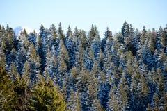 美好的多雪的山法国阿尔卑斯冬天全景风景有冷杉森林视图背景 库存照片