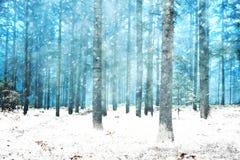 美好的多雪的梦想的森林风景 免版税库存照片