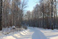 美好的多雪的森林寒冷冬天 免版税图库摄影