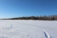 美好的多雪的森林寒冷冬天 库存照片