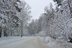 美好的多雪的森林寒冷冬天 免版税库存图片