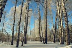 美好的多雪的森林寒冷冬天 免版税库存照片