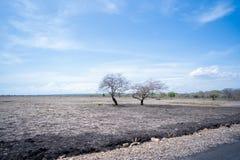美好的大草原风景在Baluran Banyuwangi印度尼西亚 免版税库存照片